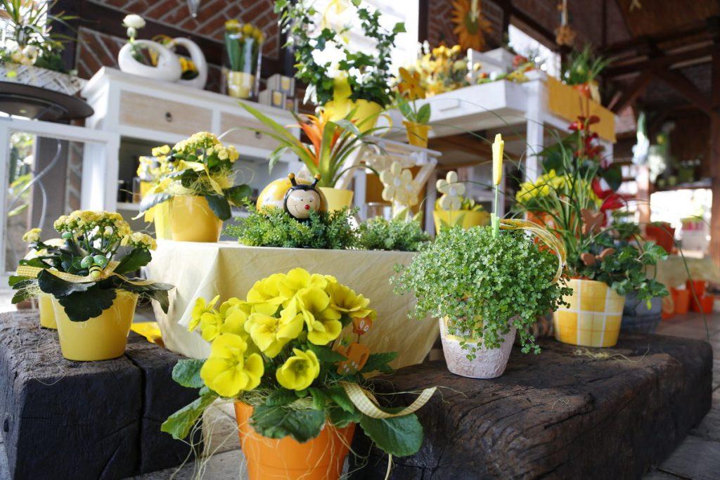Gartenbau und Floristik Blumen Teipel Dolberg Topfpflanzen