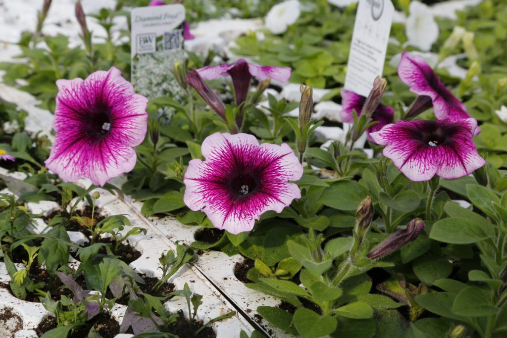 Gartenbau und Floristik Blumen Teipel Dolberg Gartenpflanzen