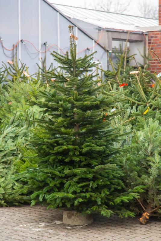 Gartenbau und Floristik Blumen Teipel Dolberg Weihnachtsbaum